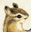 エゾシマリスのイラスト しまりすの挿絵 りすのカット絵 Chipmunk illust