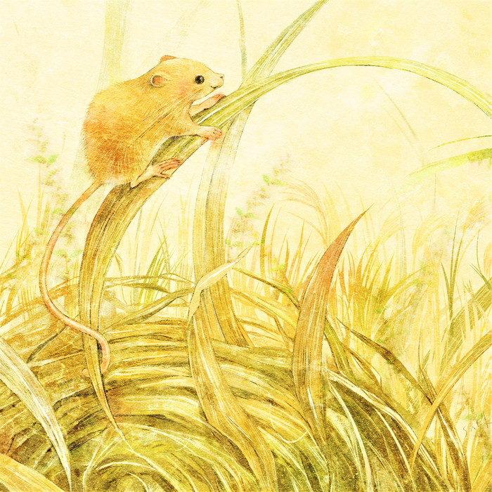 カヤネズミのイラスト 水彩風の挿絵 茶草場