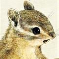 シマリスのイラスト 絵本タッチ シマリスの絵 Chipmunk illust