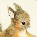 ニホンリスのイラスト 夏毛のニホンリスの絵 日本の野生動物のイラスト Squirre illust