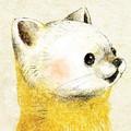 テンの絵 ニホンテンのイラスト 絵 日本の野生動物のイラスト marten illust
