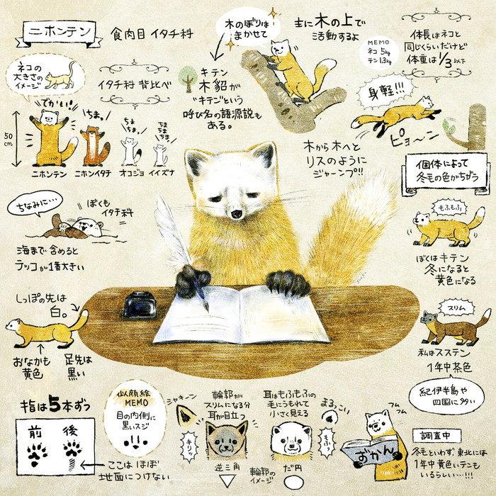 ニホンテン・ホンドテン・キテンのイラスト 絵 日本の野生動物のイラスト