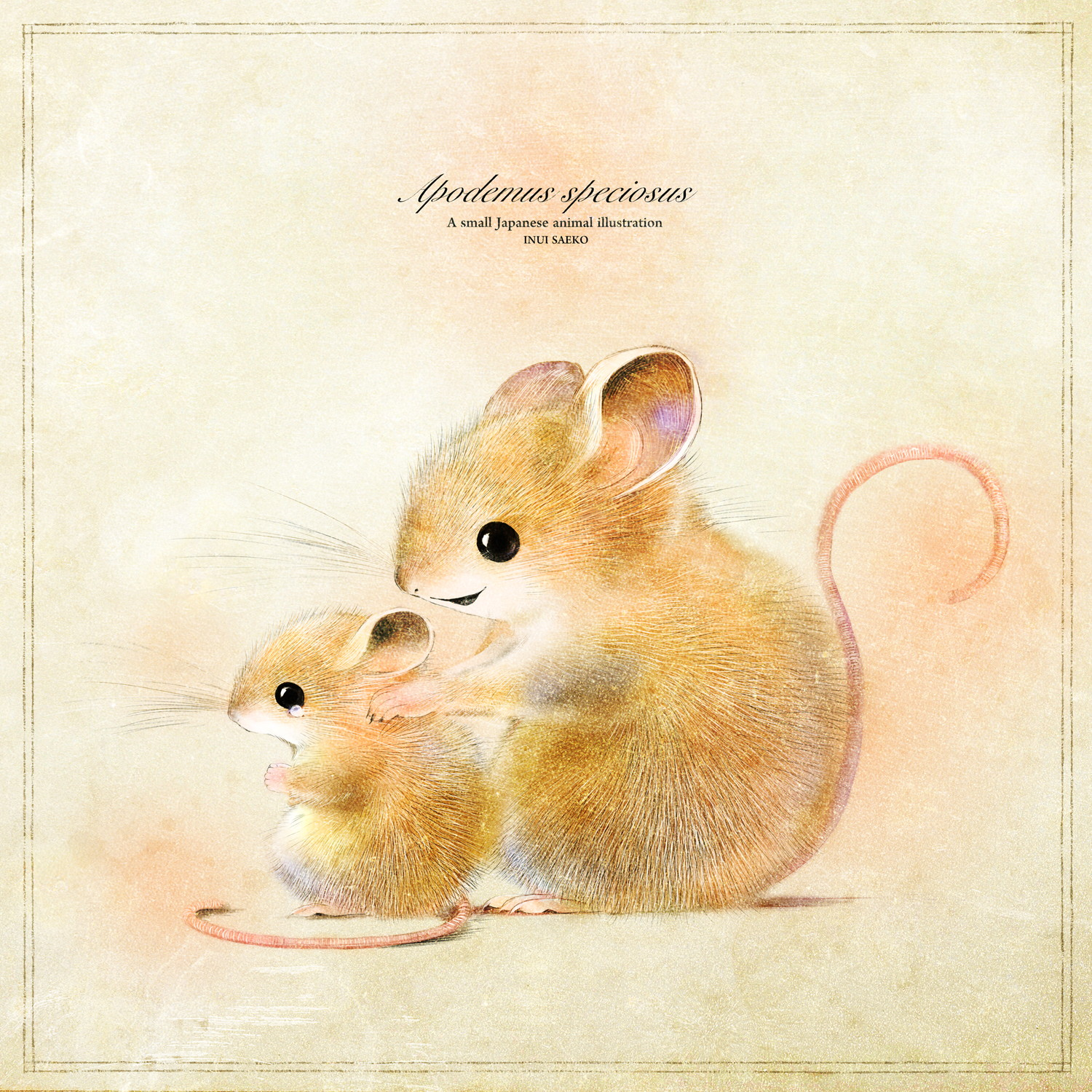 wood-mouse02