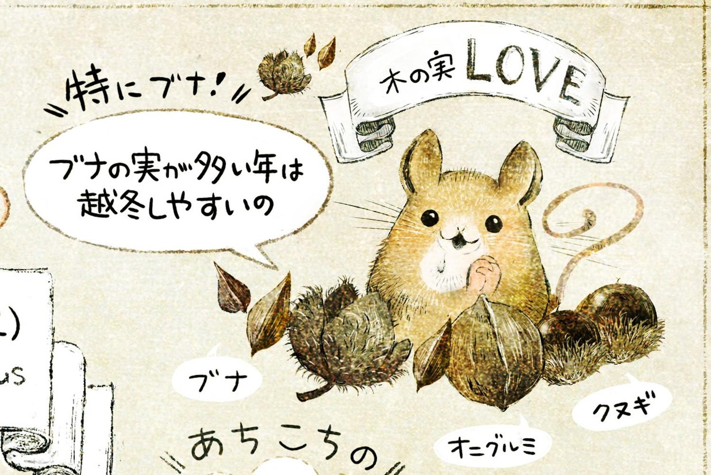 アカネズミのくらし どんぐりが好き。ブナ・オニグルミ・クヌギのイラスト
