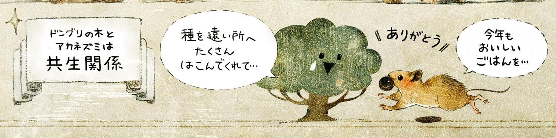 アカネズミのくらし どんぐりの木とアカネズミは共生関係
