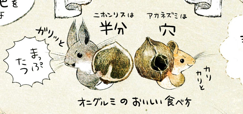 アカネズミとニホンリス オニグルミの食べ後・食痕