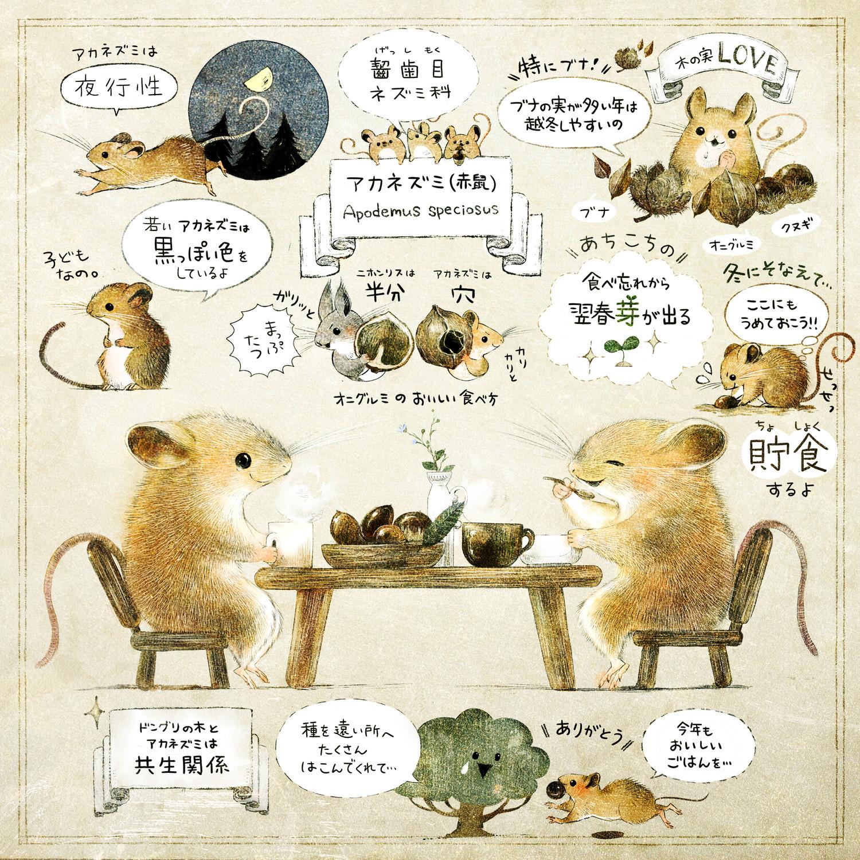 アカネズミのくらし ネズミの生態画・解説イラスト