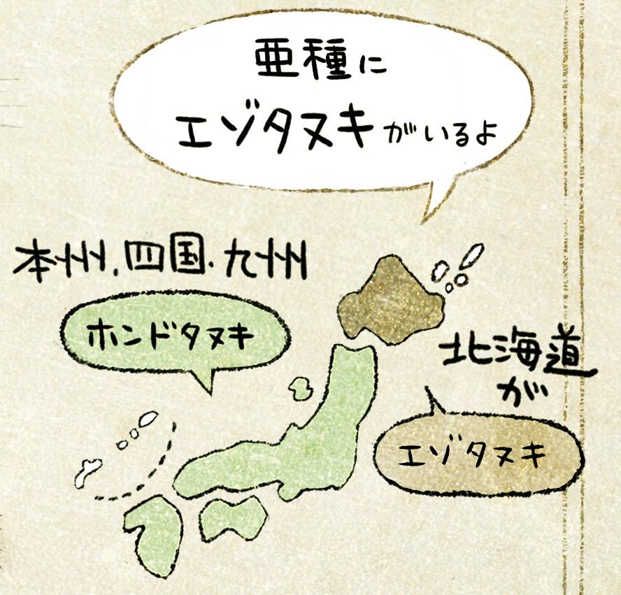 ホンドタヌキの生態 イラスト解説 タヌキの生息地。本州四国九州に暮らすのがホンドタヌキ