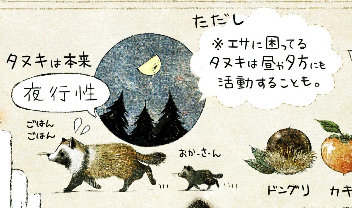 タヌキは夜行性 ホンドタヌキの生態 イラスト解説