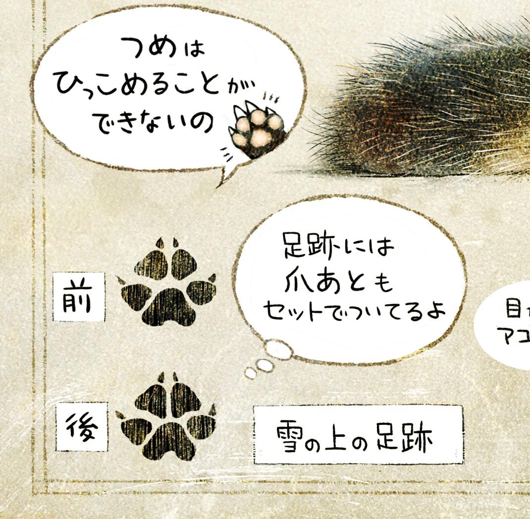 タヌキの足跡 ホンドタヌキの生態 イラスト解説