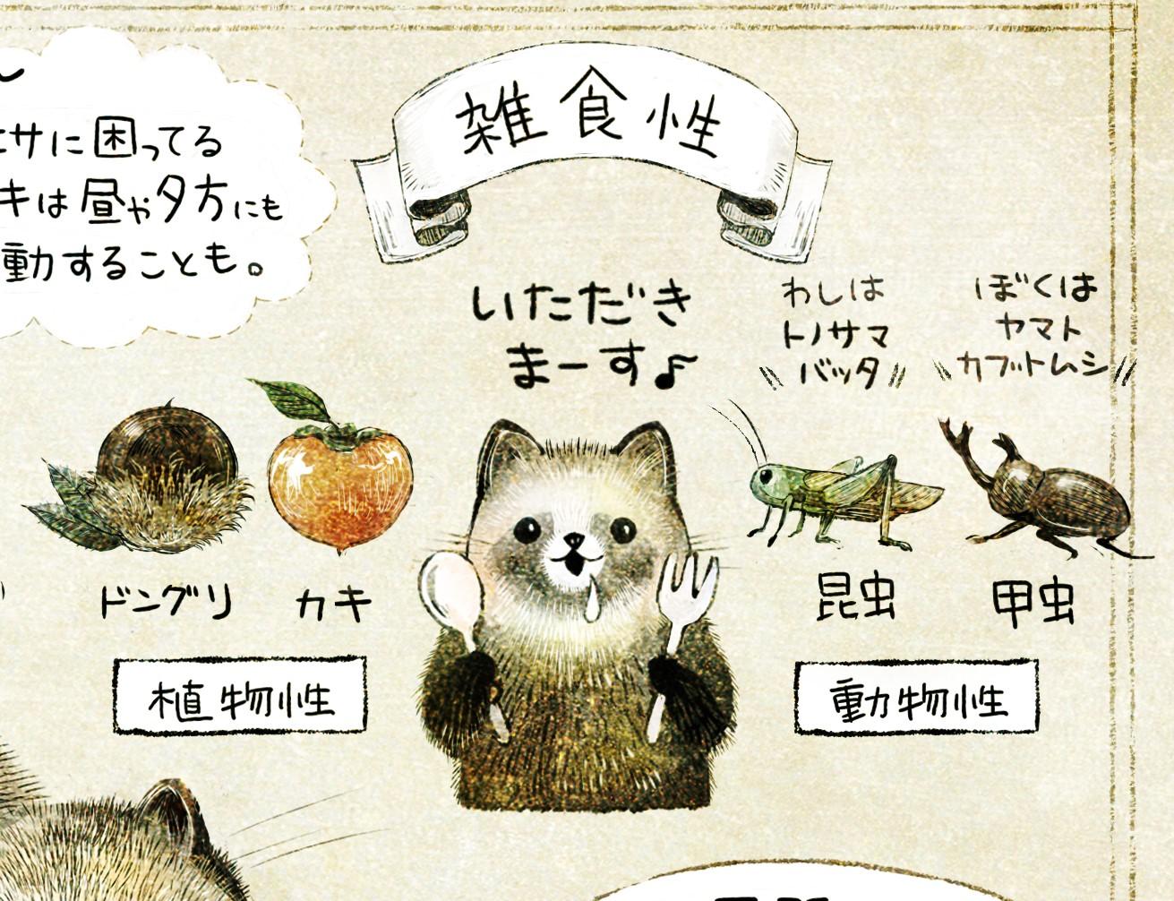 ホンドタヌキの生態 イラスト解説 タヌキは雑食性で、ドングリやカキ、昆虫(バッタやカブトムシ)を食べるよ。