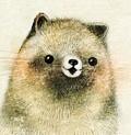タヌキのこども raccoon dog