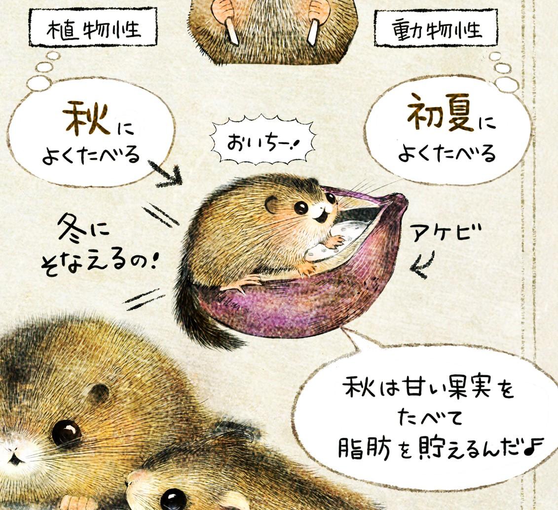ニホンヤマネの生態 イラスト解説 ヤマネの食性・餌。初夏は動物性、秋は植物性(果実)を多く食べる