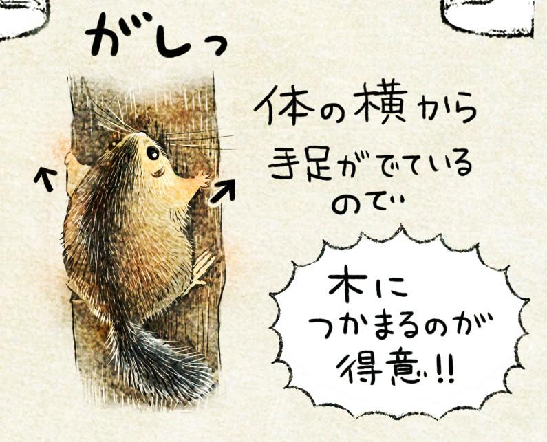 ニホンヤマネの生態 イラスト解説 ヤマネは木登りが得意