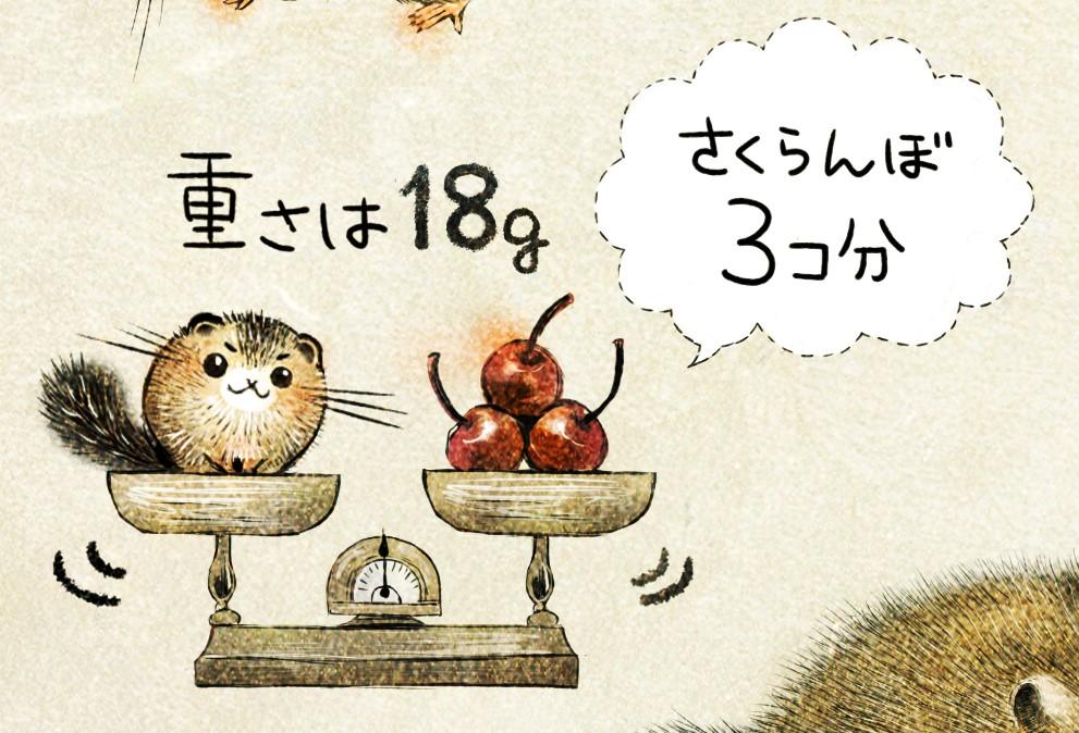 ニホンヤマネの生態 イラスト解説 ヤマネの重さは18g。
