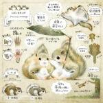 ニホンモモンガの解説イラスト 大きさ、皮膜、指の数、夏毛と冬毛、ムササビとの違い