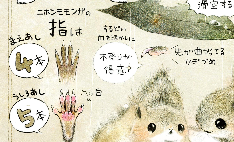 モモンガの生態 イラスト解説 モモンガの指は前脚が4本、後ろ脚が5本