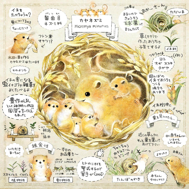カヤネズミとは?イラスト解説 カヤネズミのエサ、食べ物、巣作り、赤ちゃんを見つけたら?害獣なの?イネを食べるの?
