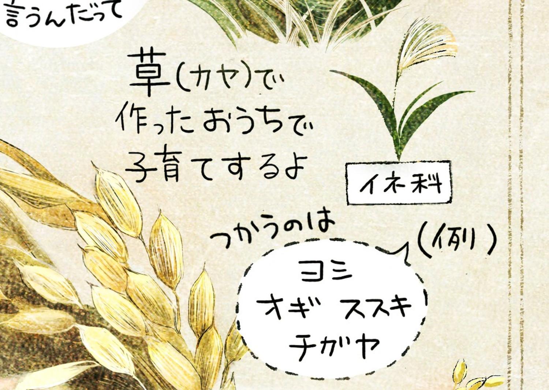 カヤ(草)を編んで、巣を作るよ。巣作りに使うのは、ヨシ、オギ、ススキ、チガヤなどイネ科の植物。カヤネズミとは?イラスト解説