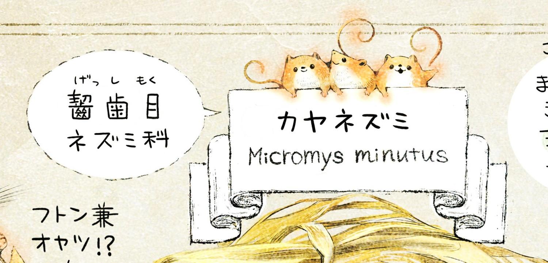 カヤネズミとは?イラスト解説 カヤネズミは、齧歯目ネズミ科の動物。