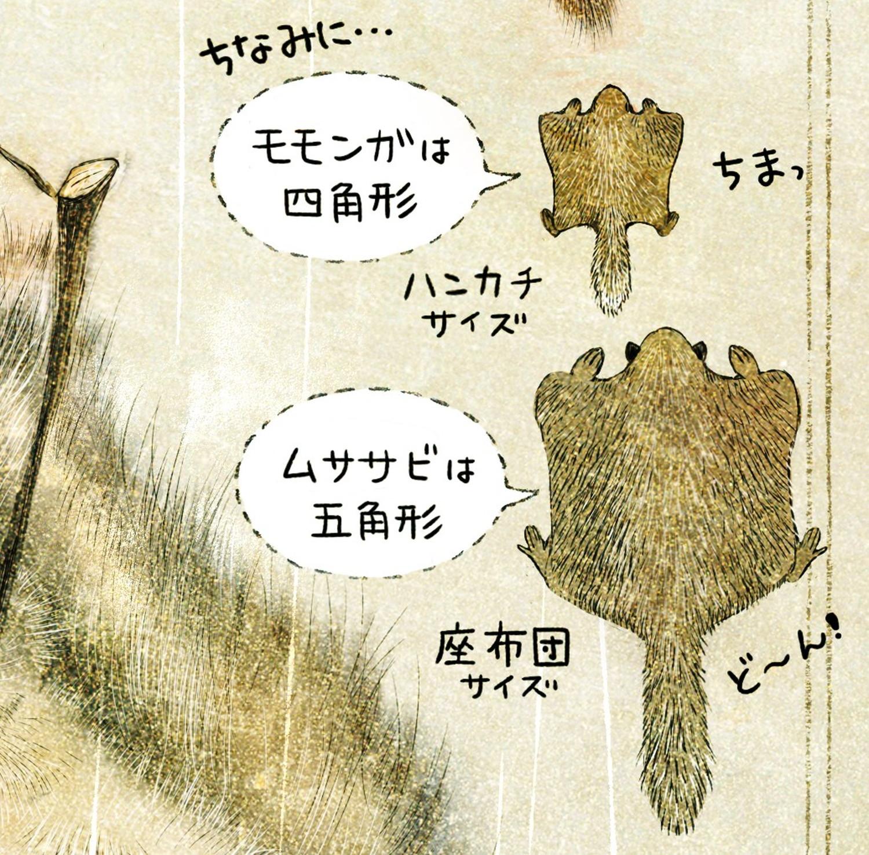 モモンガは四角、ムササビは五角形 ニホンモモンガの生態 イラスト解説 飛ぶときの形。
