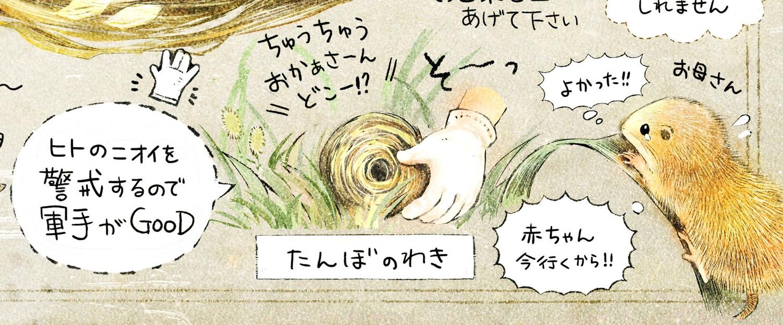 巣やネズミの赤ちゃんを見つけた時は?軍手でそっと草むらに巣を置いて下さい。お母さんネズミが迎えに来るかもしれません。カヤネズミとは?イラスト解説