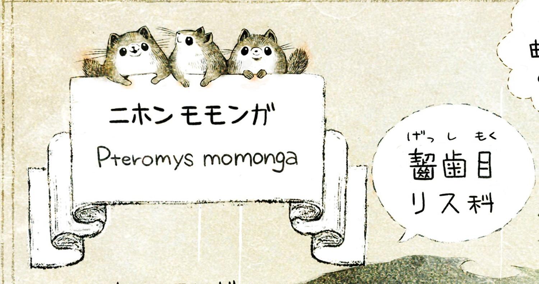 ニホンモモンガの生態 イラスト解説 モモンガは齧歯目リス科の生きもの。学名はPteromys momonga