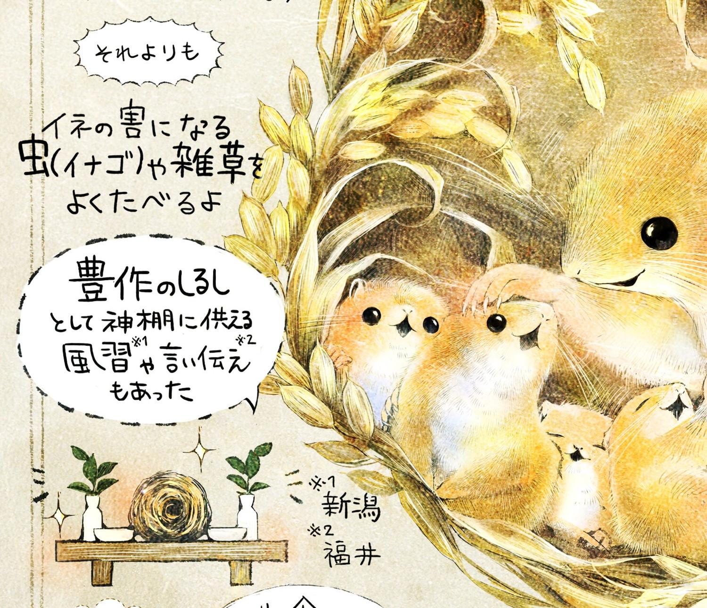カヤネズミとは?イラスト解説 カヤネズミは、害獣か?豊作のしるしとする風習もあった。イナゴやヒエをよく食べる。