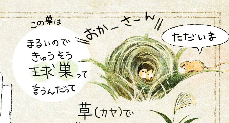 カヤネズミとは?イラスト解説 カヤネズミは草で巣を作るネズミ。巣は丸い事から球巣(きゅうそう)と呼ばれる。