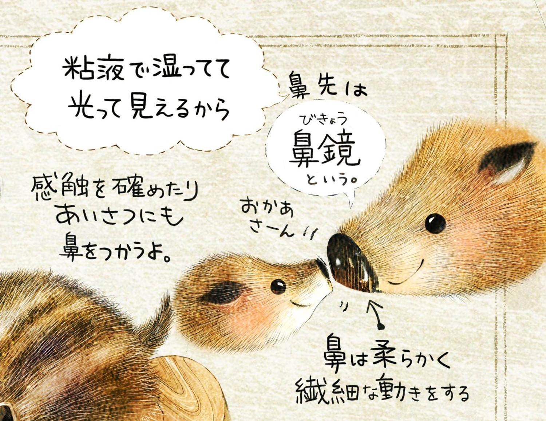 イノシシの鼻先の絵 ニホンイノシシのイラスト イノシシの暮らし・生態の解説