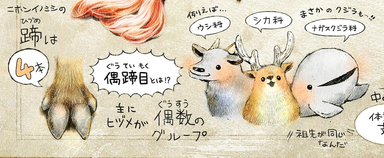 偶蹄目とは? 蹄が偶数のグループ ニホンイノシシのイラスト イノシシの暮らし・生態の解説 Boar