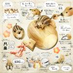 ニホンイノシシのイラスト イノシシの暮らし・生態の解説 Boar