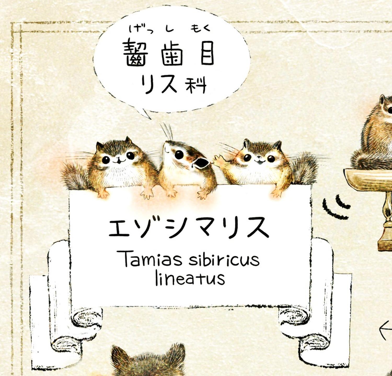エゾシマリスの学名 Tamias sibiricus lineatus エゾシマリスのイラスト シマリスの暮らし・生態の解説 chipmunk