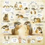 エゾシマリスのイラスト シマリスの暮らし・生態の解説 chipmunk
