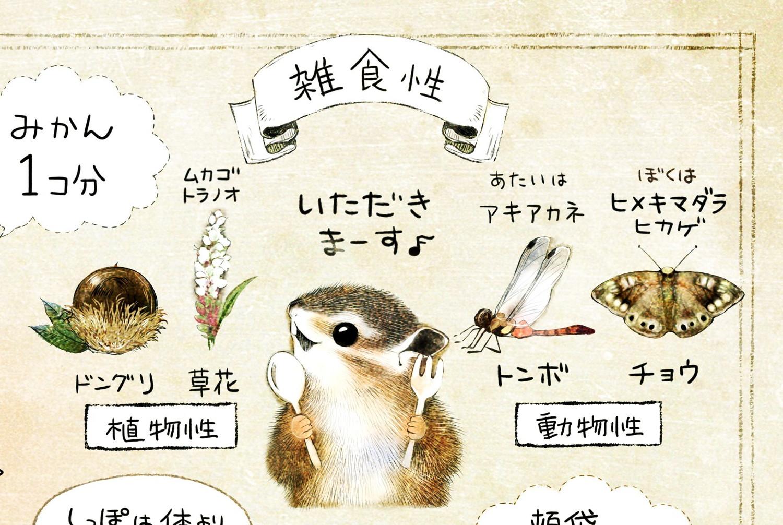 シマリスの食べ物 ドングリ・草花・昆虫・トンボ・蝶 エゾシマリスのイラスト シマリスの暮らし・生態の解説 chipmunk