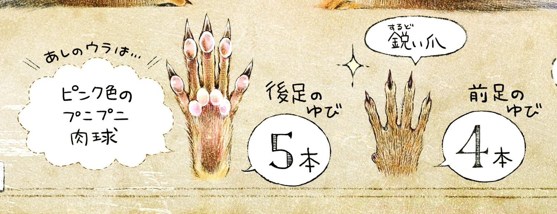 シマリスの肉球 前足の指は4本、後ろ足は5本 エゾシマリスのイラスト シマリスの暮らし・生態の解説 chipmunk