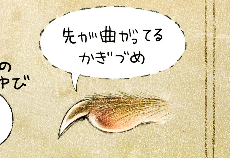 シマリスの指先・爪。エゾシマリスのイラスト シマリスの暮らし・生態の解説 chipmunk