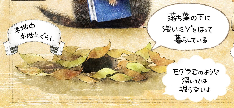 ヒミズのイラスト ヒミズは落ち葉の下で暮らしている。 【ヒミズ(shrew-mole)】動物の暮らし・生態の解説
