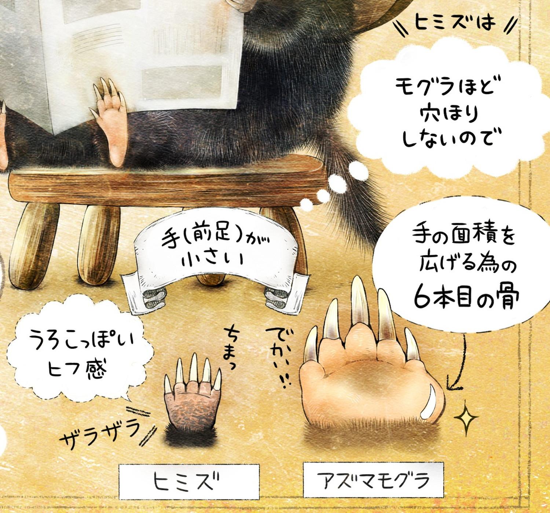 ヒミズのイラスト ヒミズの手、モグラとの比較 【ヒミズ(shrew-mole)】動物の暮らし・生態の解説