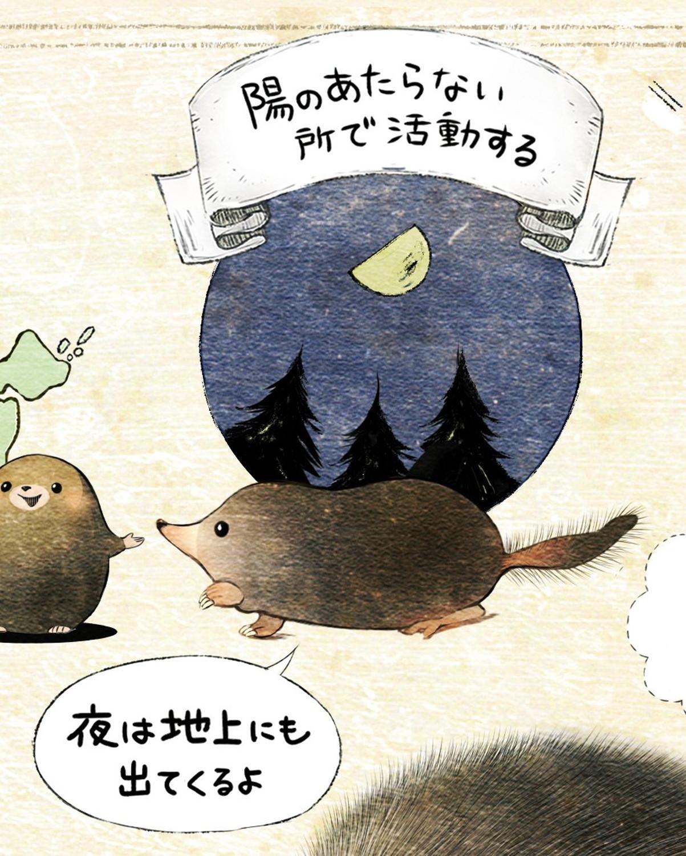 ヒミズのイラスト ヒミズは陽の当たらない所で活動する 【ヒミズ(shrew-mole)】動物の暮らし・生態の解説
