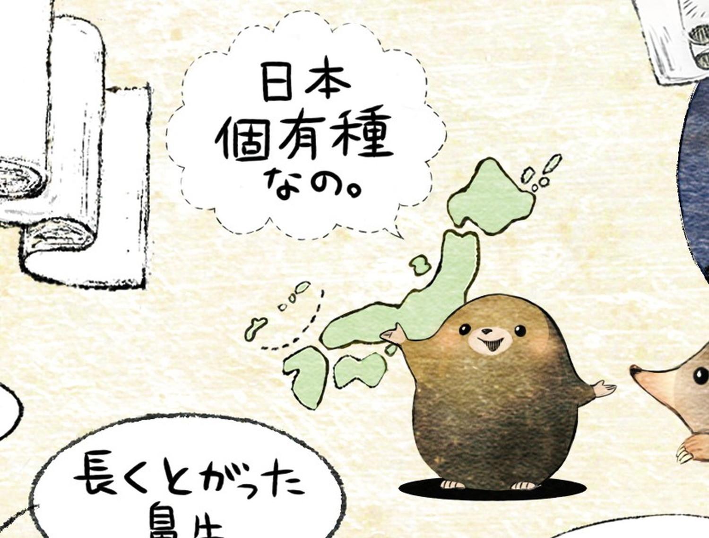 ヒミズのイラスト ヒミズは日本固有種 【ヒミズ(shrew-mole)】動物の暮らし・生態の解説