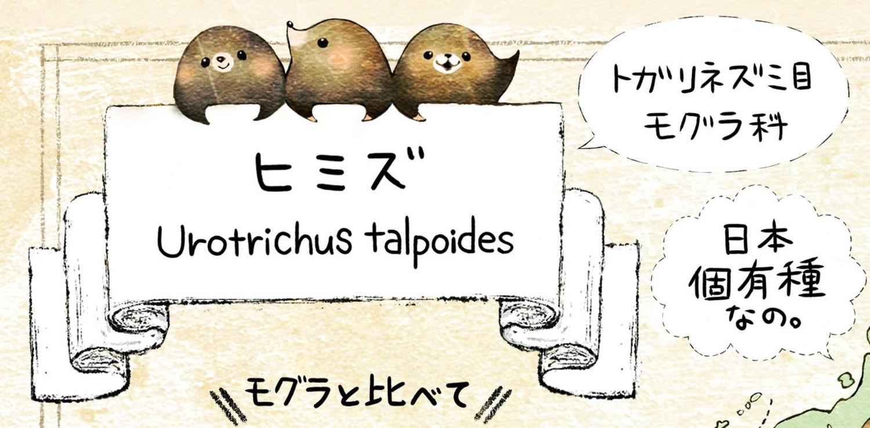 ヒミズのイラスト ヒミズの学名 Urotrichus talpoides 【ヒミズ(shrew-mole)】動物の暮らし・生態の解説