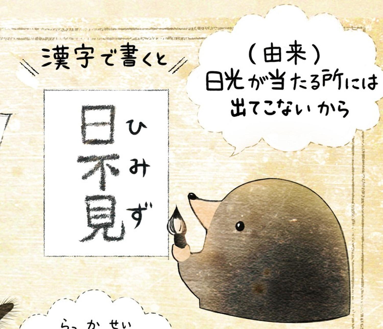 ヒミズのイラスト ヒミズは漢字表記で日不見 【ヒミズ(shrew-mole)】動物の暮らし・生態の解説